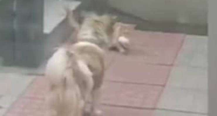 Il cane gentile (Foto video)