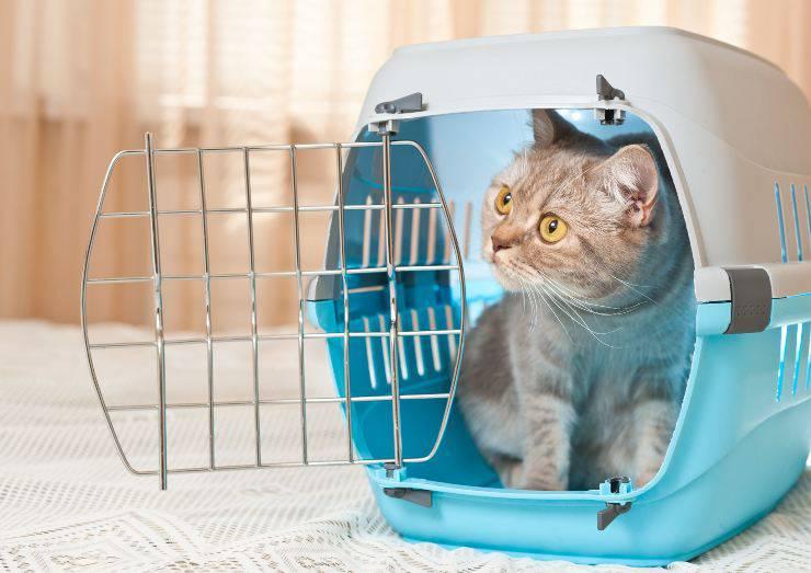 abituare il gatto al trasportino