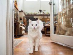 abituare il gatto alla casa nuova