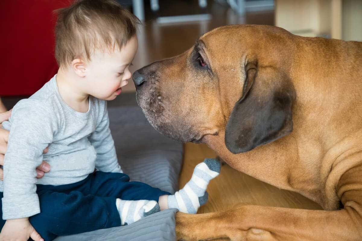 Come diventare operatore di Pet Therapy (Foto Adobe Stock)