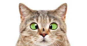 Come proteggere il gatto dalle zanzare (Foto Adobe Stock)