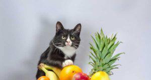 Frutta vietata al gatto (Foto Adobe Stock)