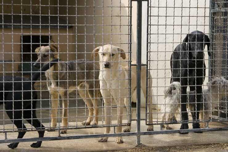Cani in gabbia (Foto Adobe Stock)