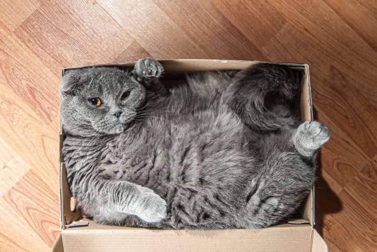 al gatto piacciono le scatole