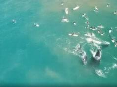 Mamma balena e il suo cucciolo