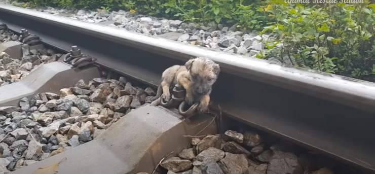 cucciolo salvato binari treno