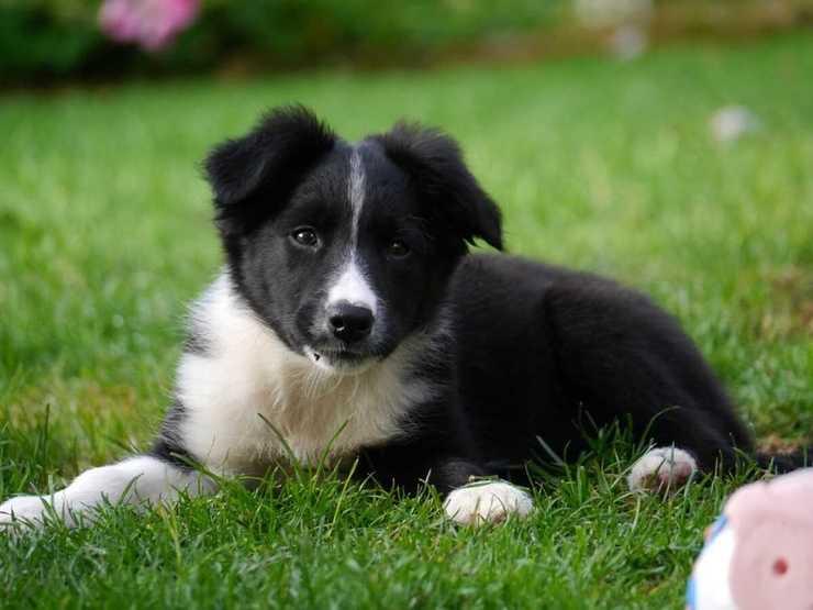 Qual è il cibo preferito del cane? (Foto Pixabay)