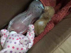Il micio e la bottiglia calda (Foto