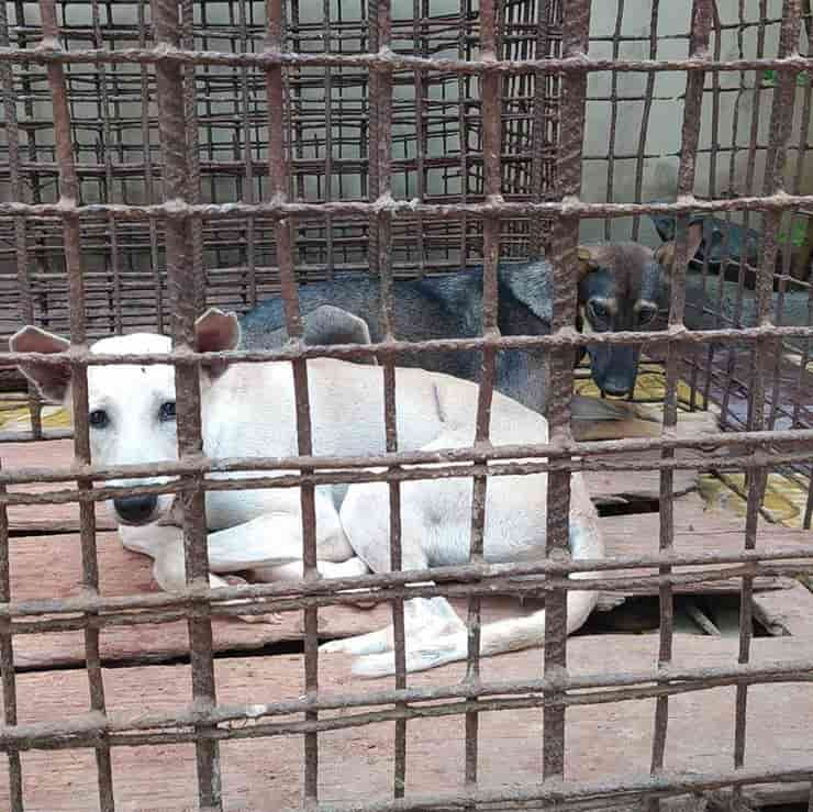 Cani salvati dal mattatoio in Cambogia