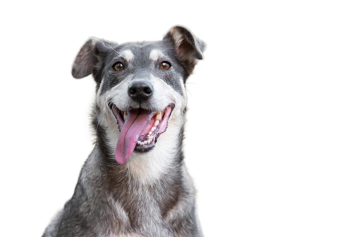 I grassi nella dieta del cane (Foto Adobe Stock)