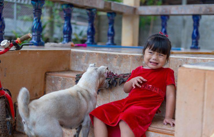 cane attacca bambino