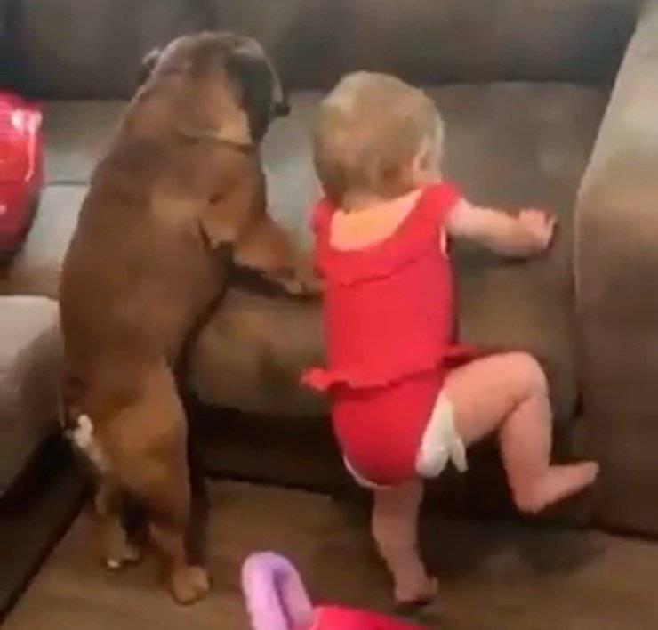 cane bambina salire divano