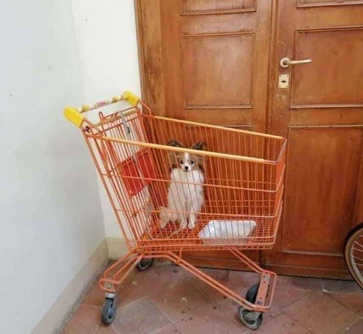Cane abbandonato in un carrello