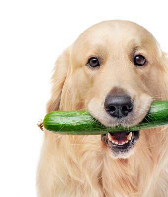 Sali minerali per il cane (Foto Adobe Stock)