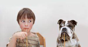 I carboidrati fanno male al cane? (Foto Adobe Stock)