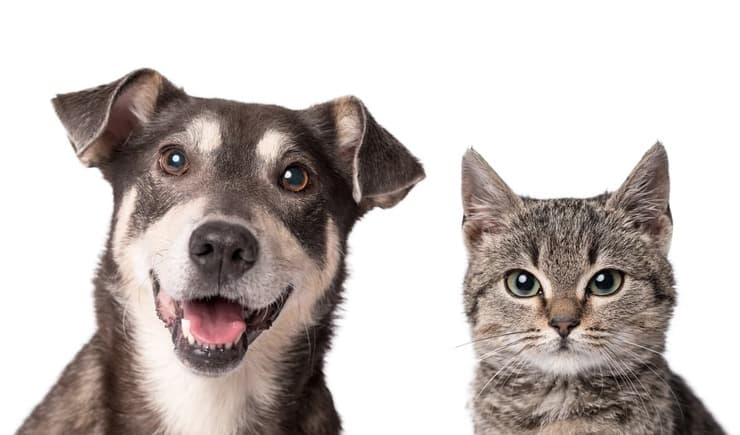 il tapetum lucidum del cane e del gatto (Foto Adobe Stock)