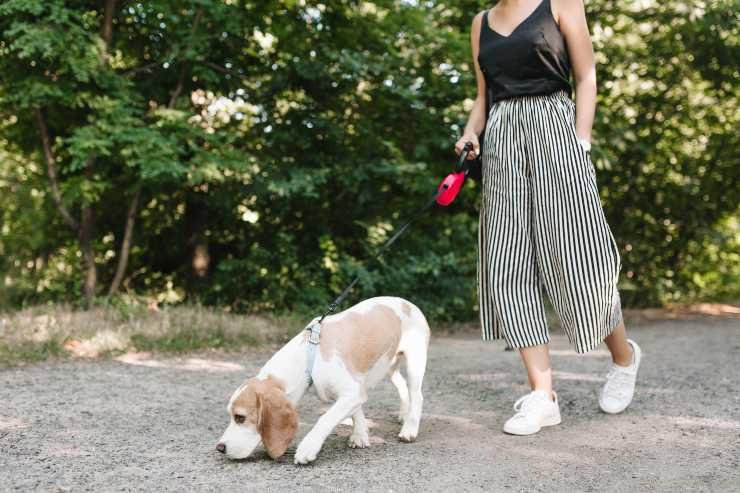 Perché il cane lecca la pipì degli altri cani