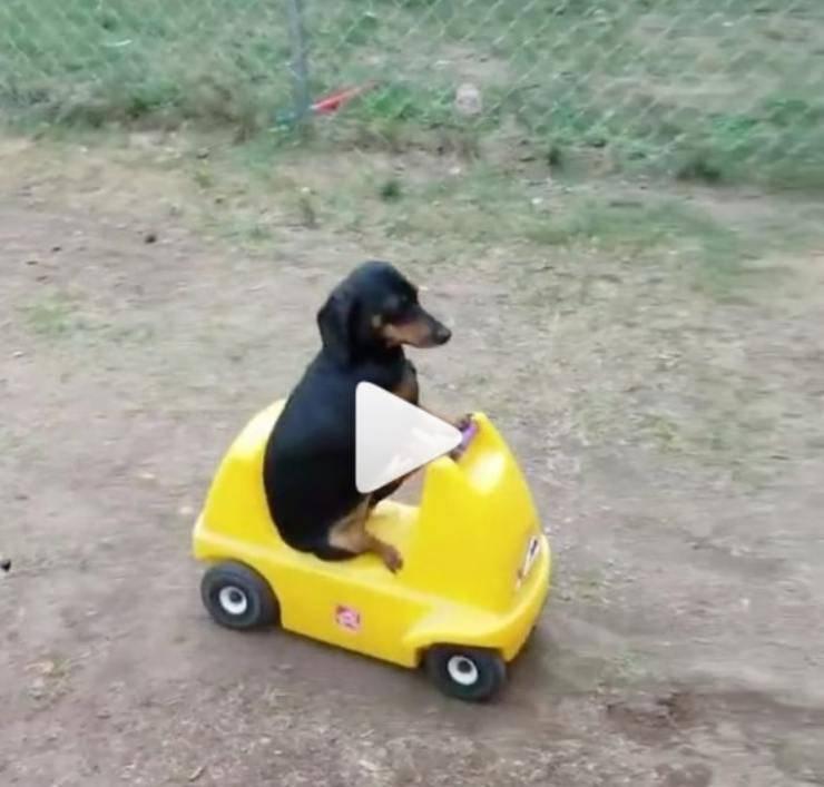 cane bordo macchina