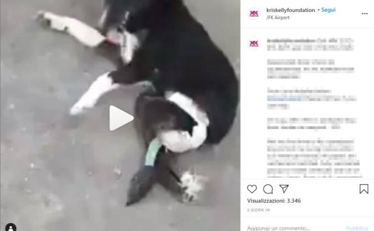 cane paralizzato aeroporto