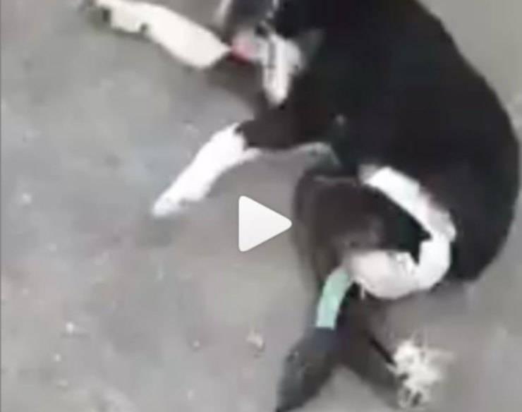 cane rischia eutanasia
