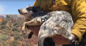 cane salvato vigili fuoco