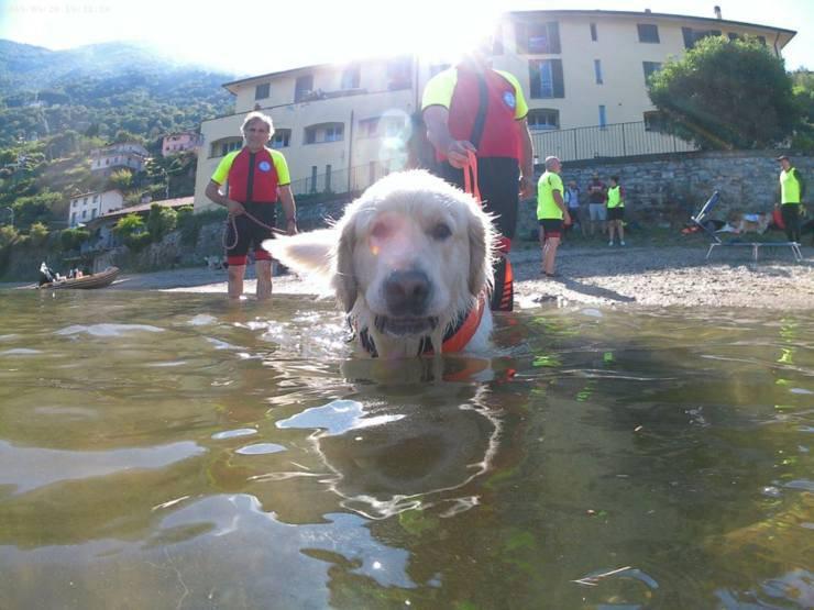 cane salva ragazza