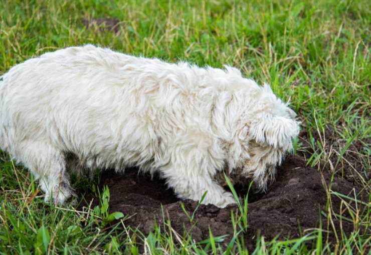 il cane distrugge il giardino