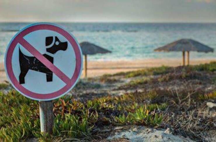 Cane in spiaggia estate 2020