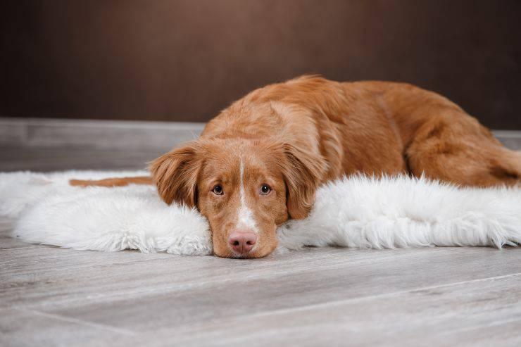 Come rallegrare il cane quando è triste