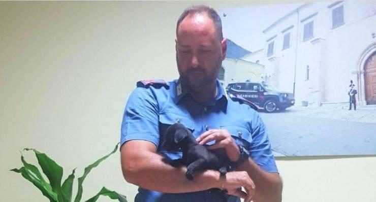 carabinieri cuccioli