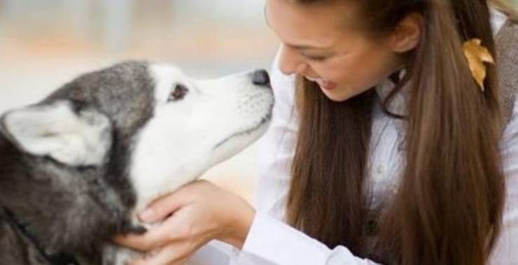 carezze cane