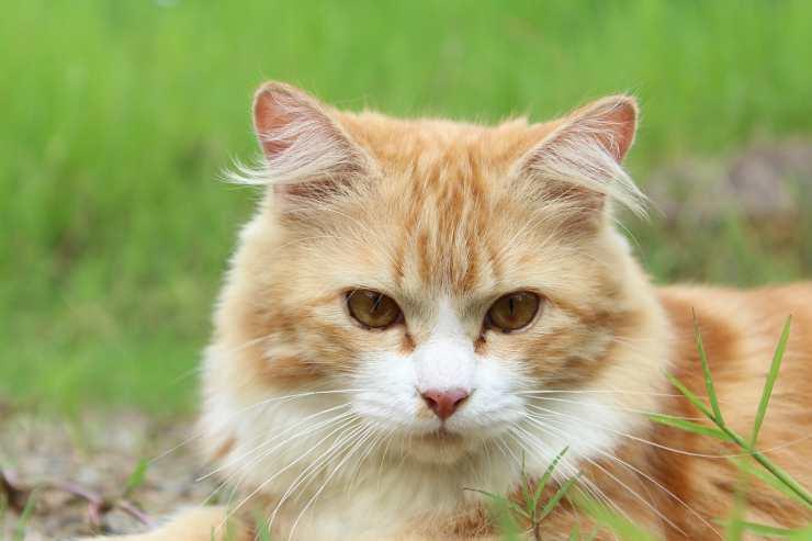 Il gatto preoccupato (foto Pixabay)