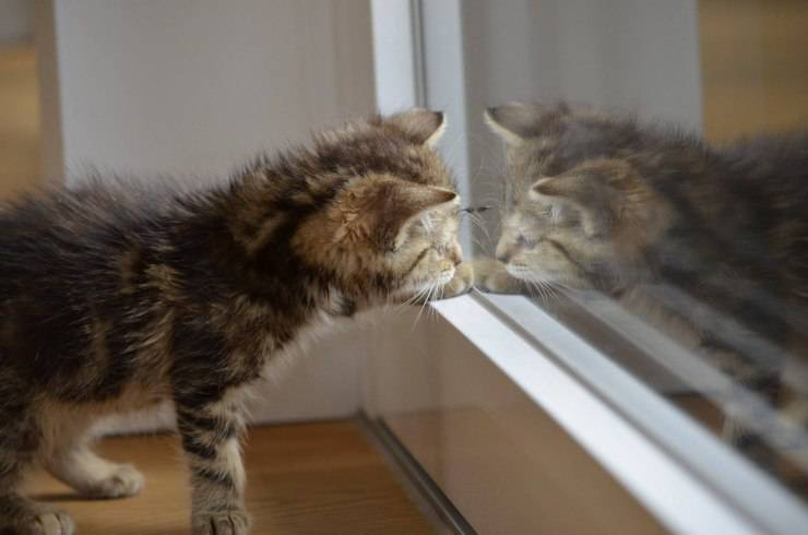 Gatto si guarda