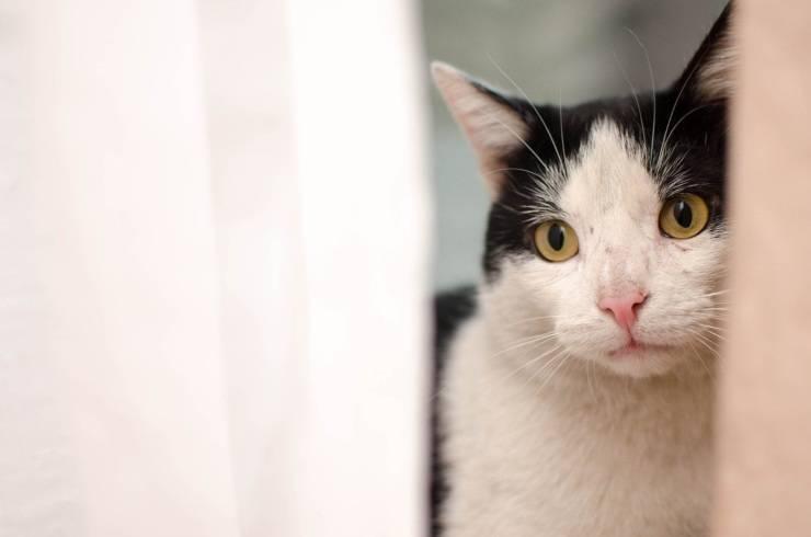 Depressione post-vacanze nel gatto