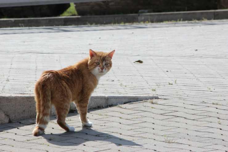Il gatto dallo sguardo furbo (foto Pixabay)