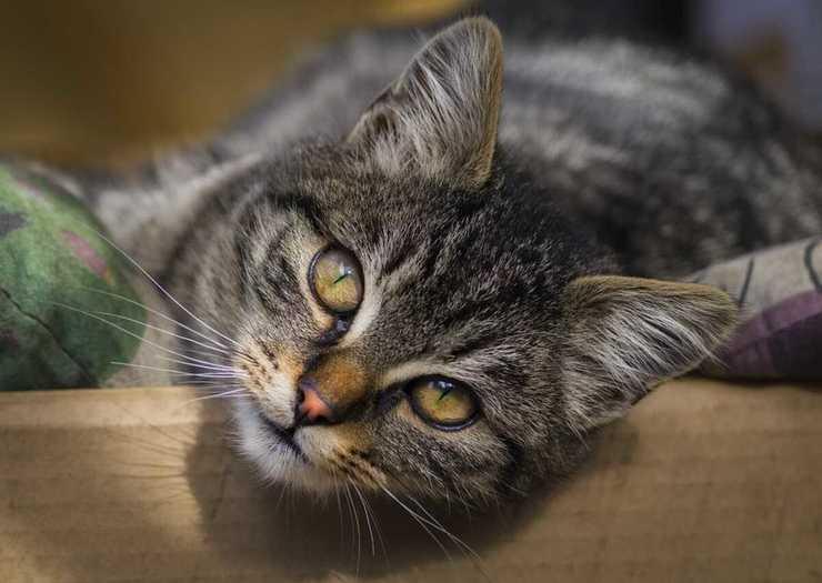 Avvelenamento da pompelmo nel gatto (Foto Pixabay)