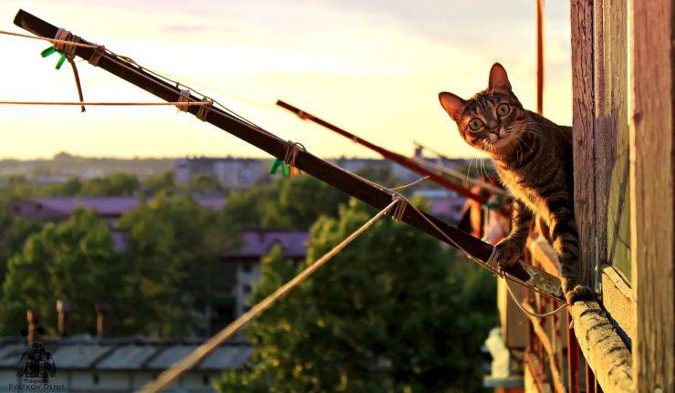 micio affacciato al balcone