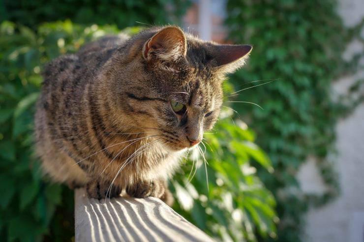 Il gatto cammina sulla ringhiera