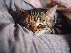 Vivere in città con un gatto