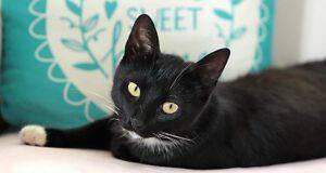 Il gatto può essere pignorato? (Foto PIxabay))