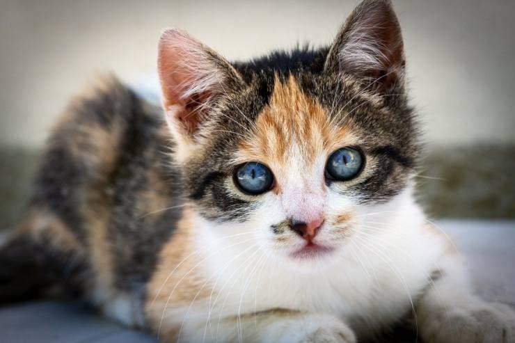 gattino colorato