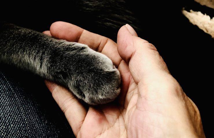 graffi gatto unghie