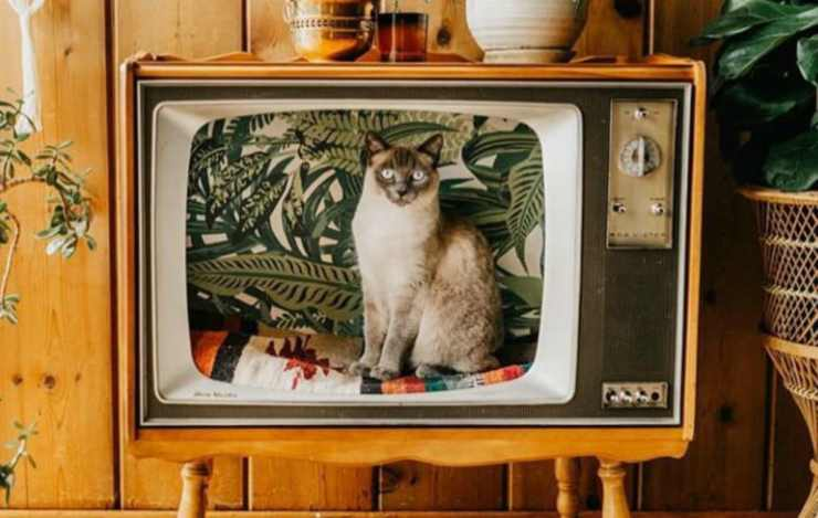 Il gatto nel televisore vintage (Foto Instagram)