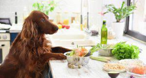 I cibi che causano allergia nel cane