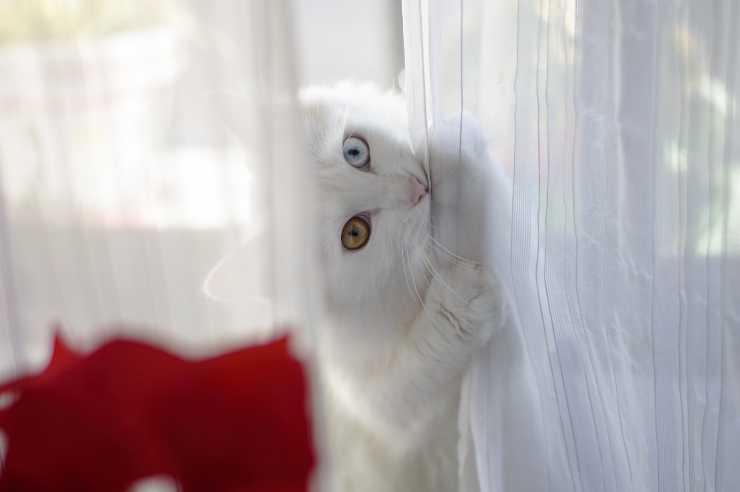 cose buffe che fa il gatto