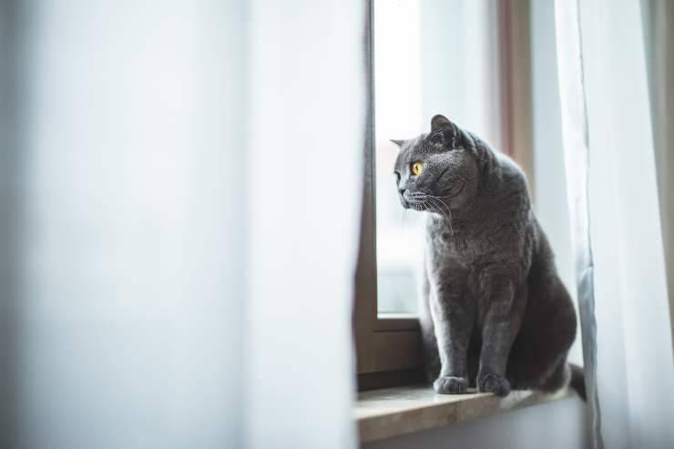 cose che i gatti possono prevedere