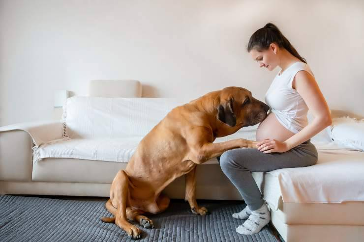 Cose che i cani possono prevedere