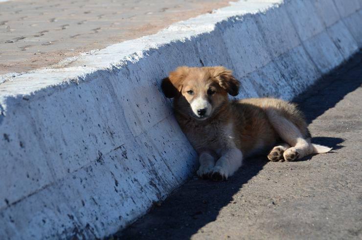 cucciolo in strada