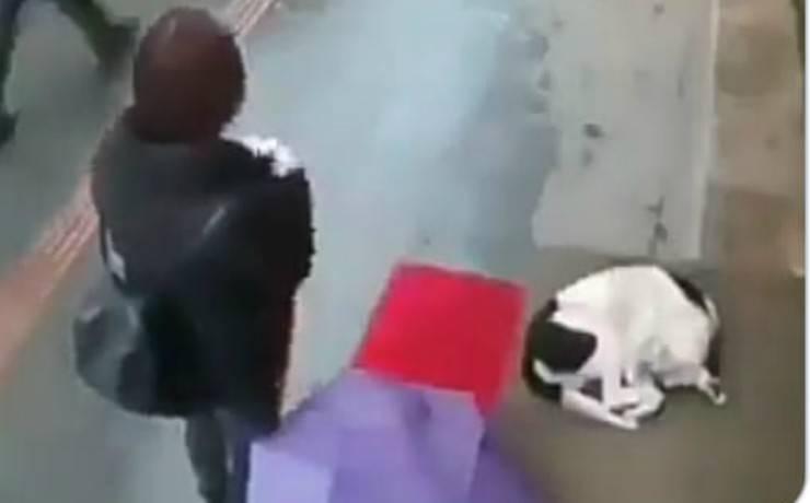 Il cane accovacciato (Foto video)