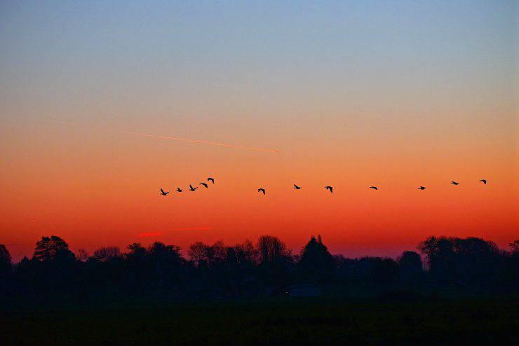 Uccelli in volo al tramonto (Foto Pixabay)